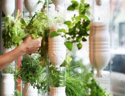Grow something different: create your own window farm!