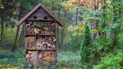 Install an insect hotel
