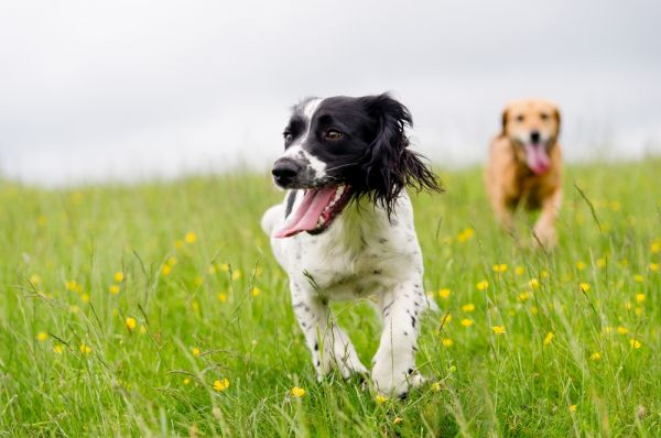 Top tips for taking your pet on holiday